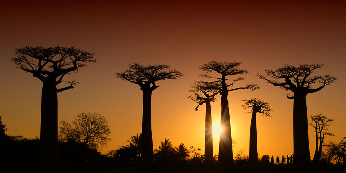 Avenue Of The Baobabs Madagascar Tribe Skincare